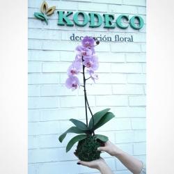 Muy feliz fin de semana💕 #kokedama #orquideas #bolademusgo